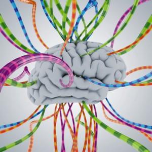 Gehirnforschung empfiehlt gute Beziehungen für virtuelle Teams